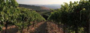 Vier de herfst in Umbrië